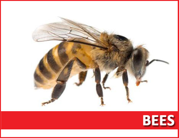 bees extermination services